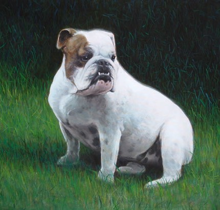 Bulldog Portrait