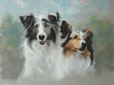 Collies Portrait
